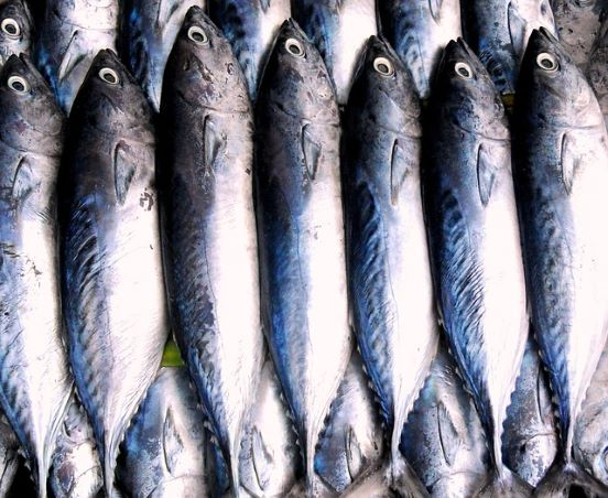 fish lined up in a line