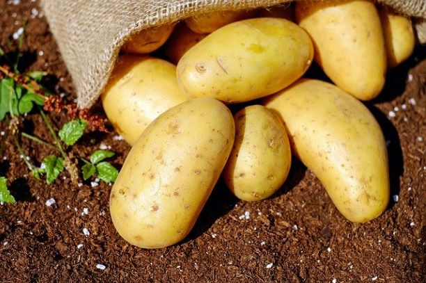 potatoes in brown bag laid on soft brown soil