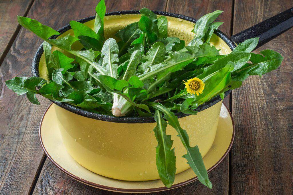 washed dandelion greens in collander