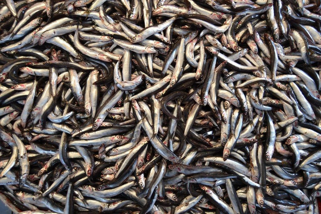 a bunch of anchovies