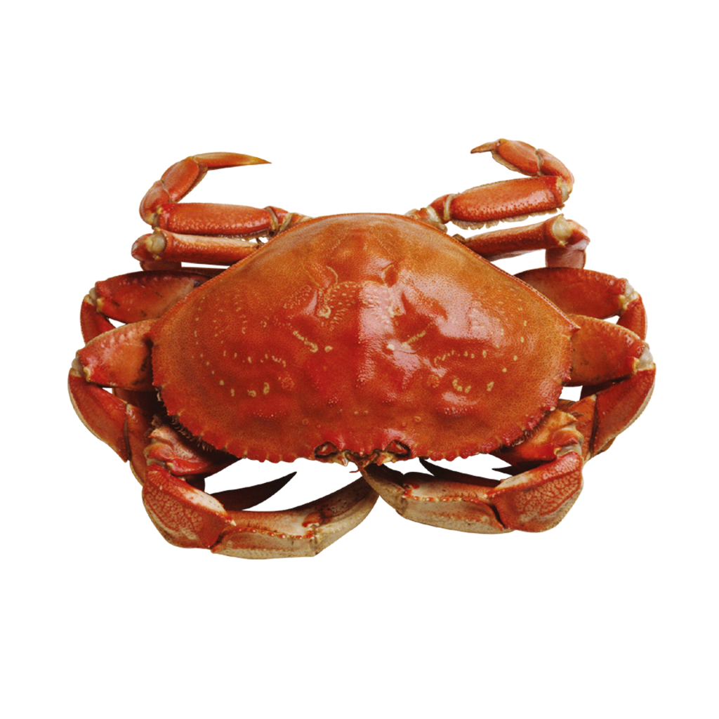 nicely placed crab