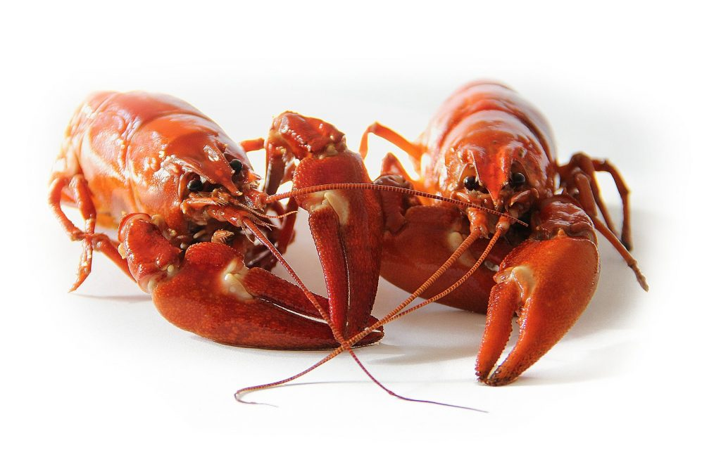 raw crayfish on a table