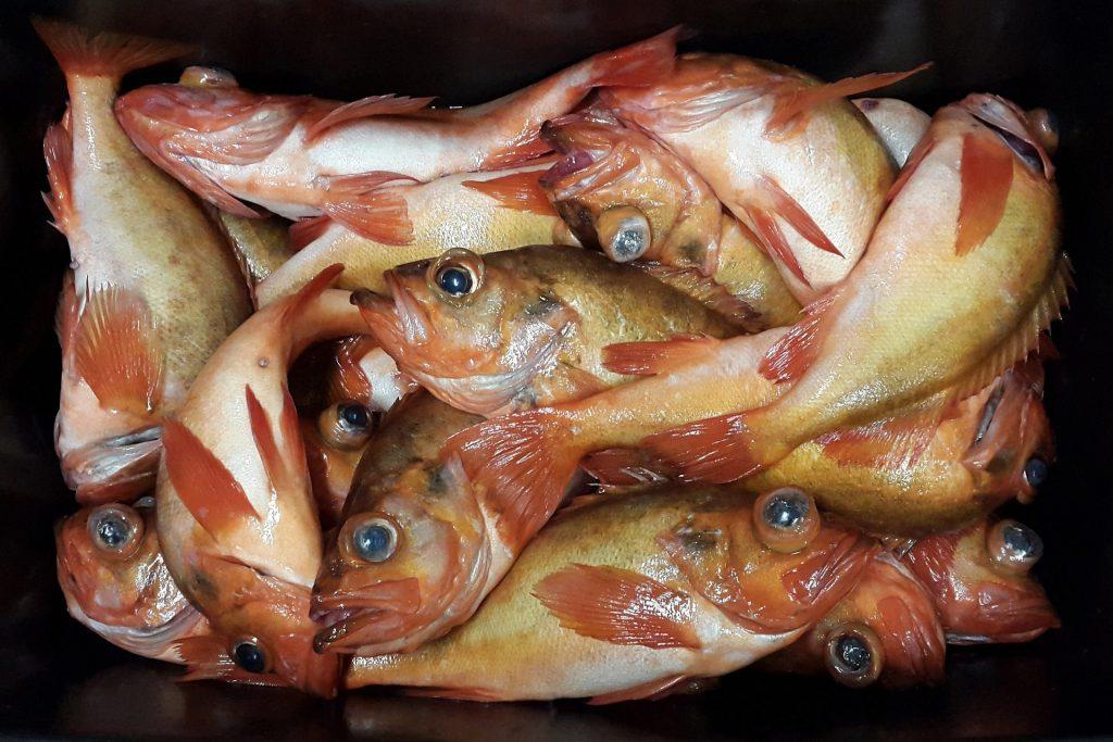 crate full of redfish